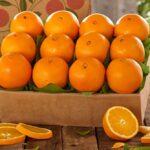 ترشی پرتقال حلقه ای با پوست